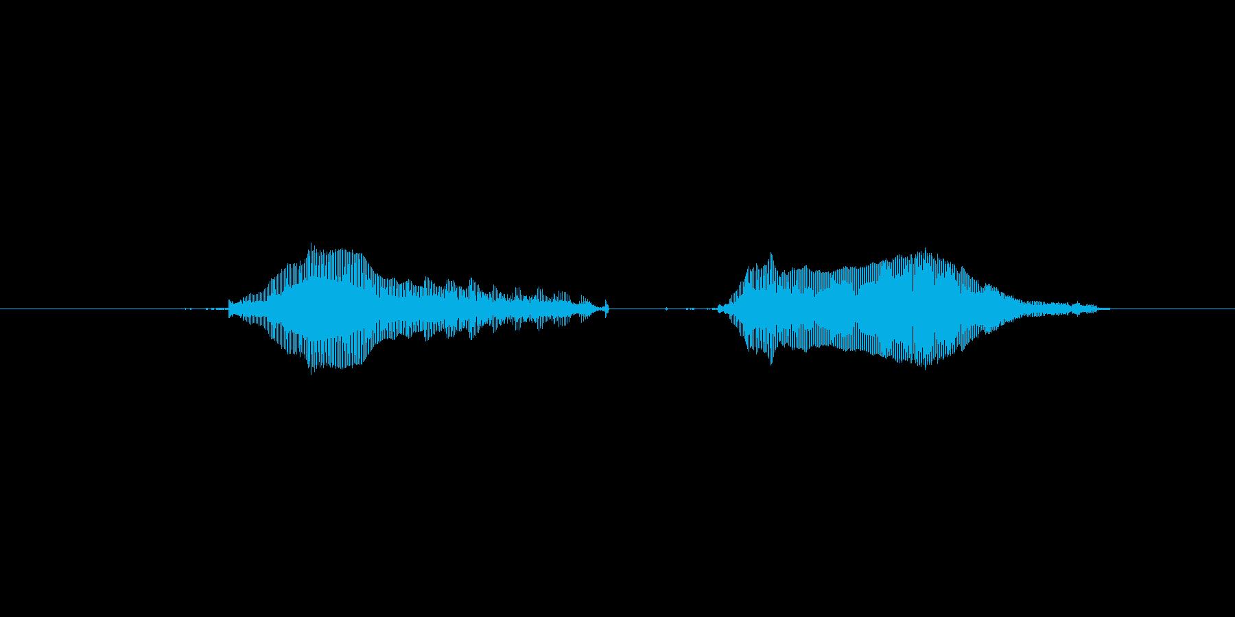 猫のミャーウミャーーウ(甘えた声)の再生済みの波形
