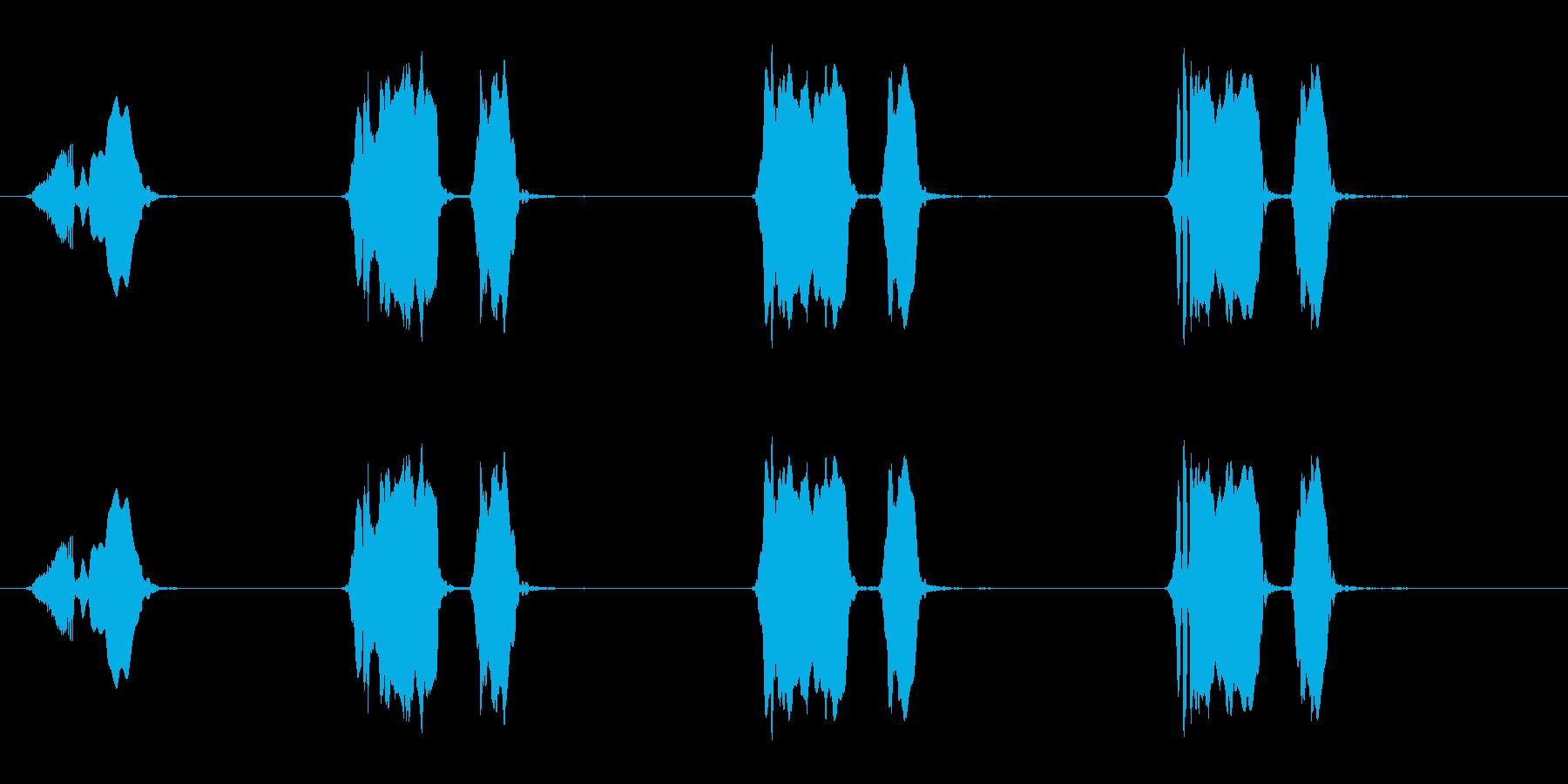 ウズラの鳴き声03-01の再生済みの波形
