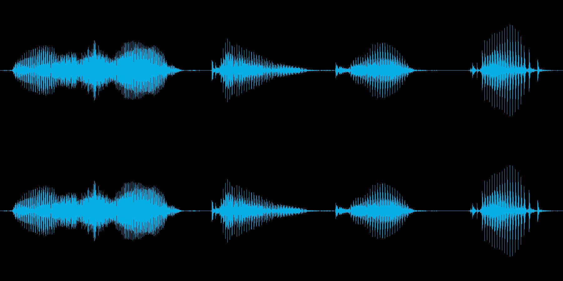 【日数・経過】2週間経過の再生済みの波形