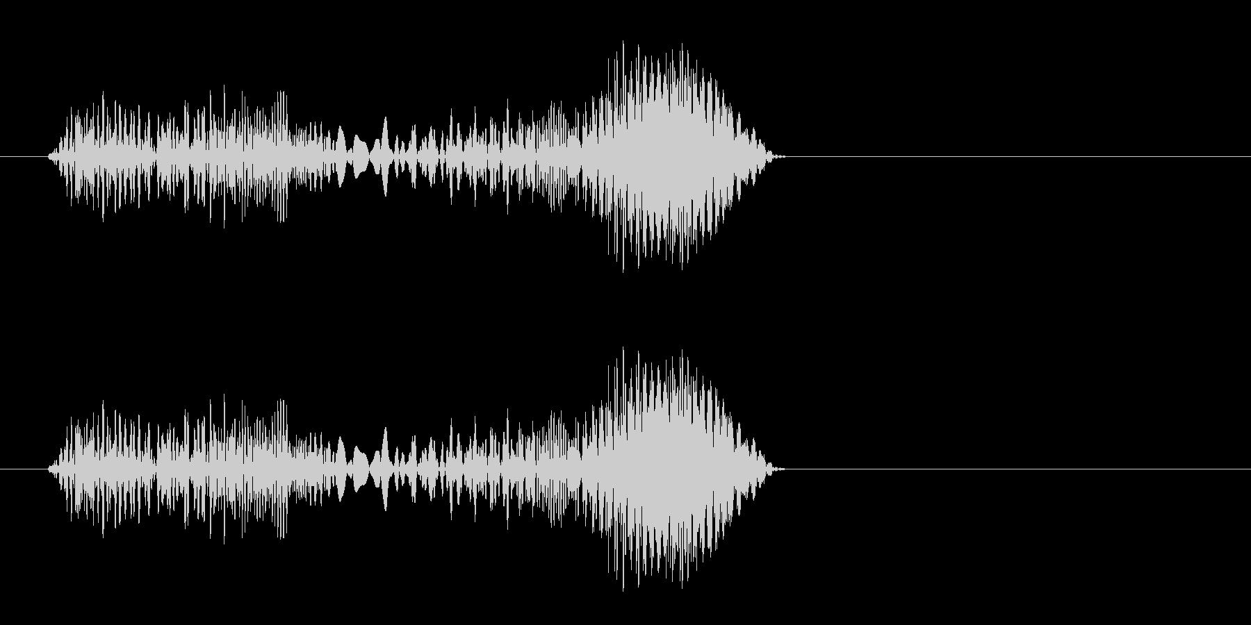 プキュ、プピッ(ハムスターの鳴き声)の未再生の波形