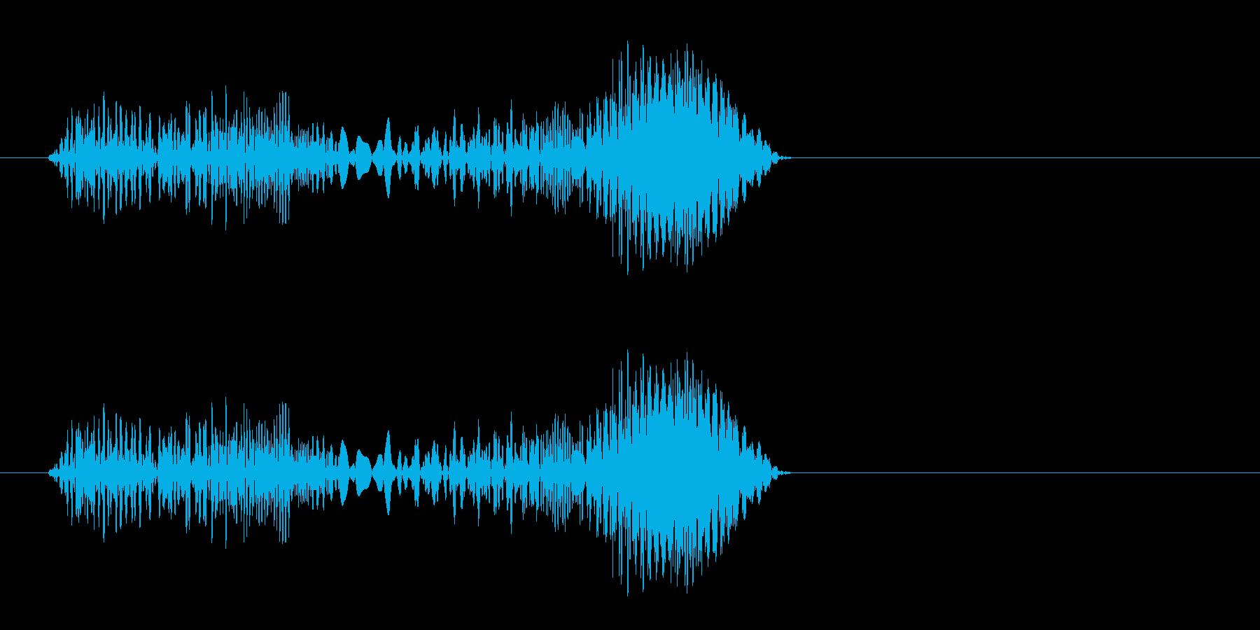プキュ、プピッ(ハムスターの鳴き声)の再生済みの波形