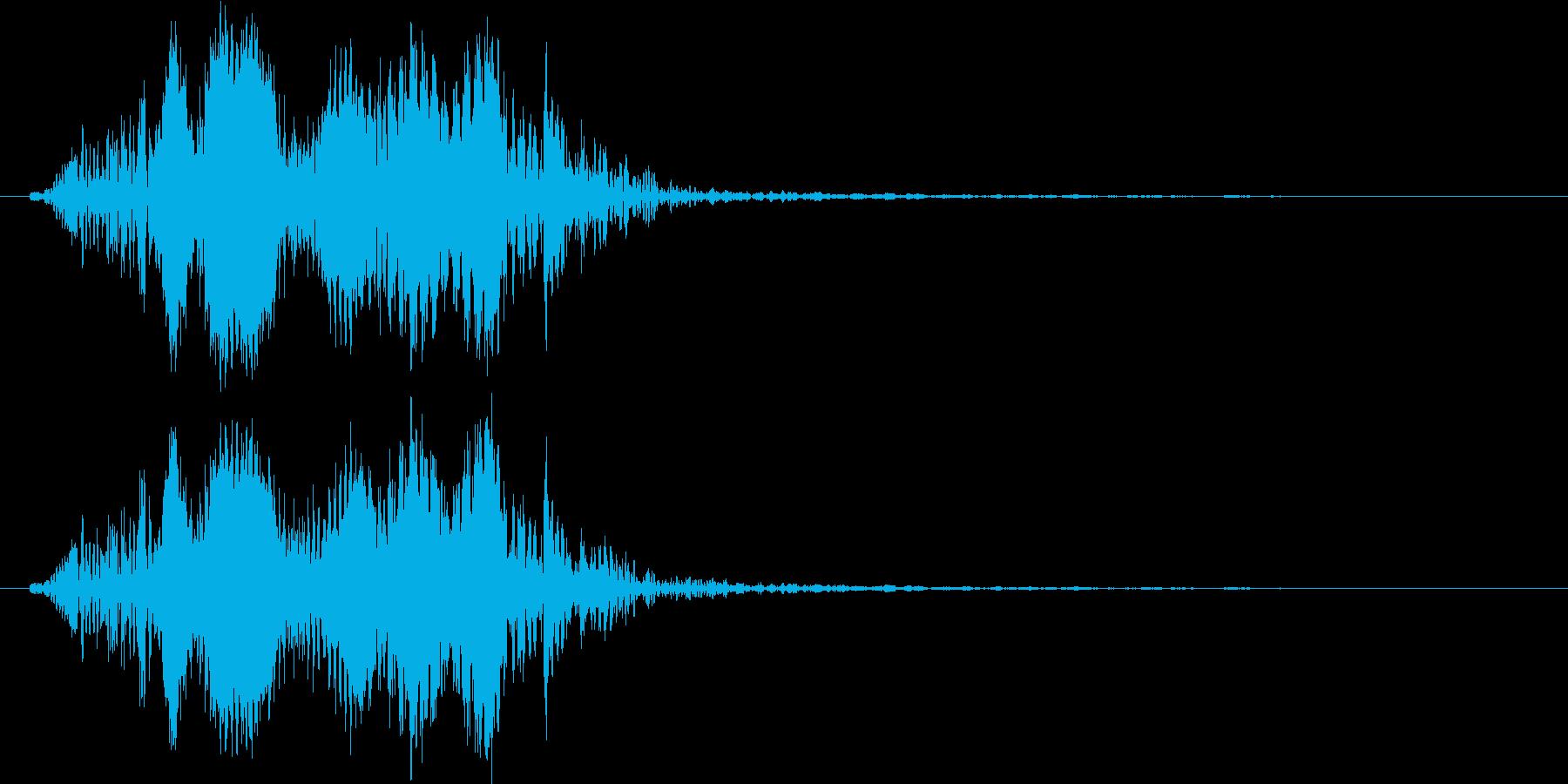 カリフォルニアアシカ(低めの声)の再生済みの波形