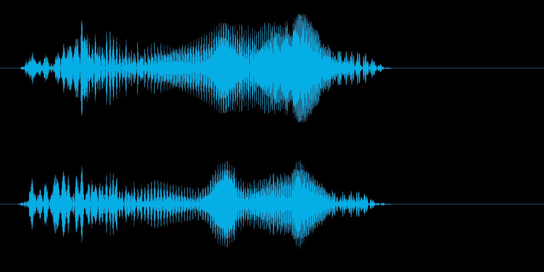あうっっ(小動物の悲鳴のような効果音)の再生済みの波形