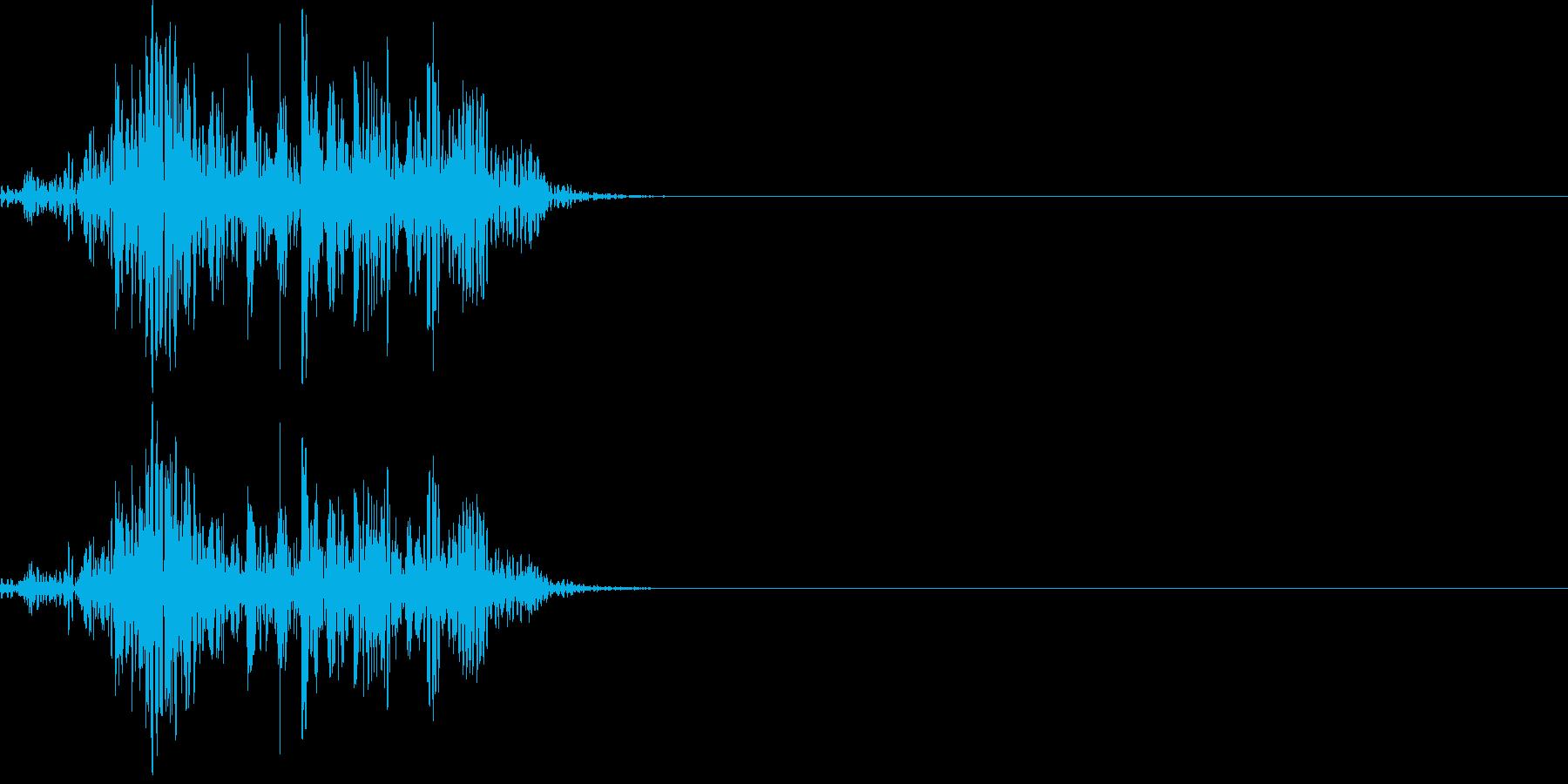 アフリカライオンの鳴き声(ケンカ)の再生済みの波形