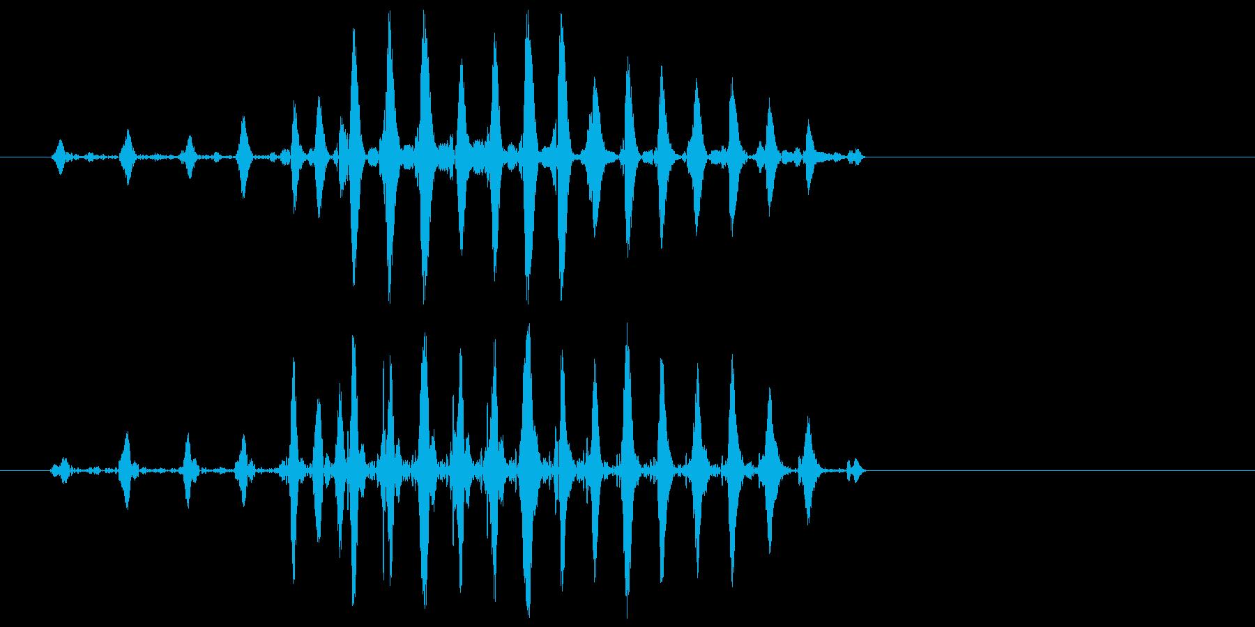 ガッ(アヒルや鴨などが鳴いたような音)の再生済みの波形