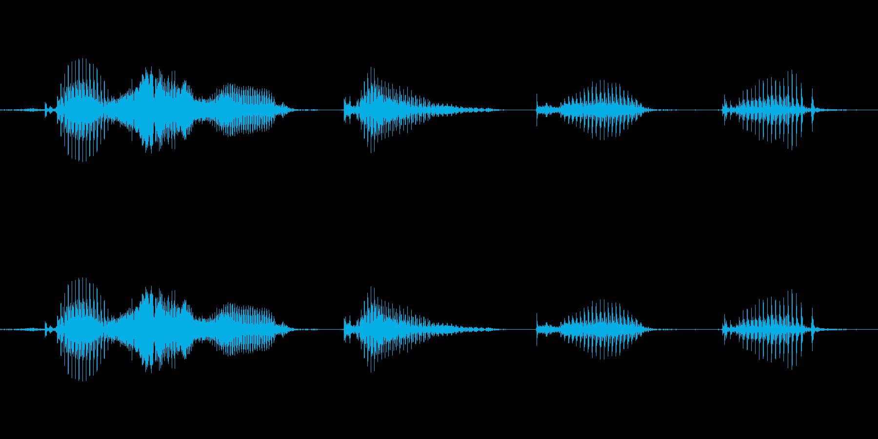 【日数・経過】5週間経過の再生済みの波形
