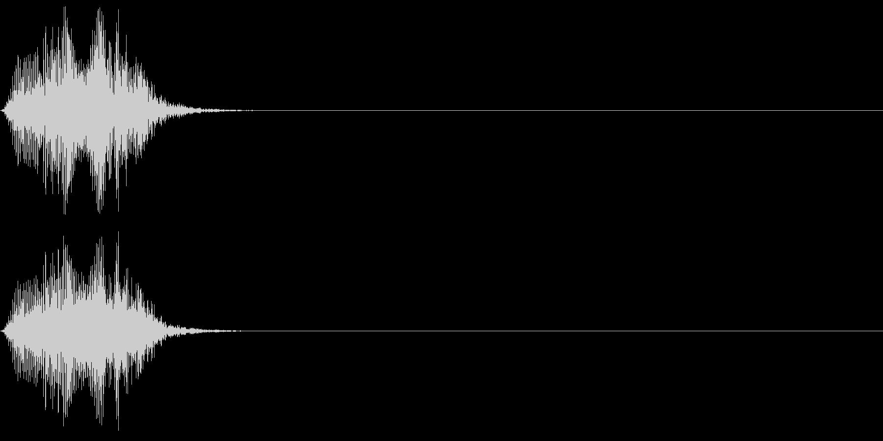 シロハラハイイロエボシドリの鳴き声の未再生の波形