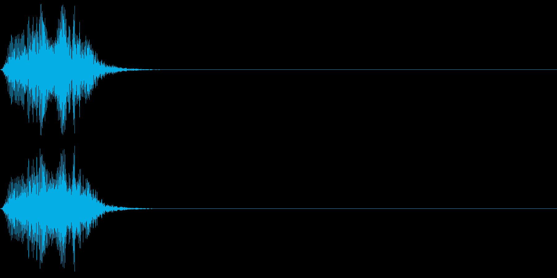 シロハラハイイロエボシドリの鳴き声の再生済みの波形
