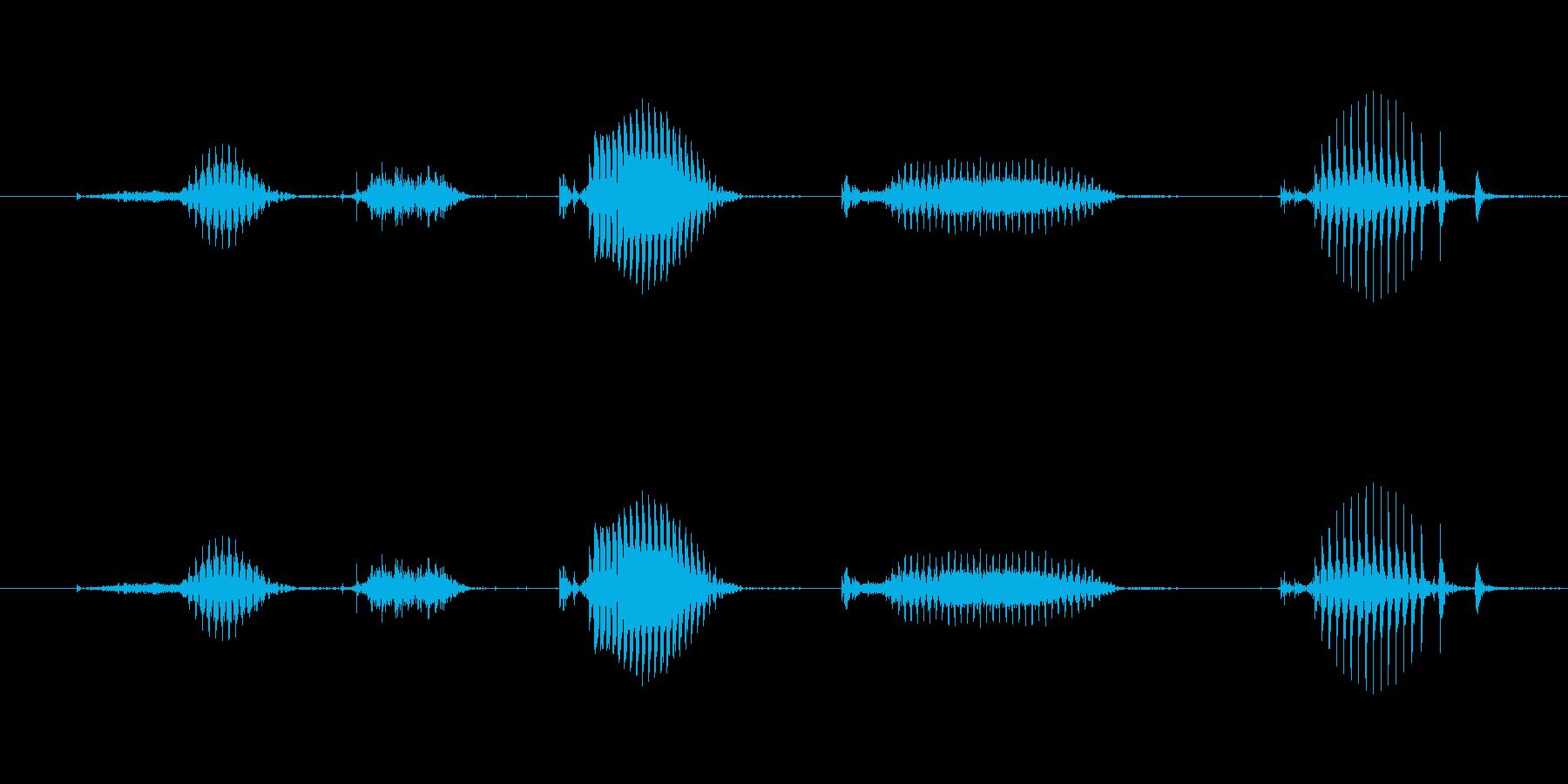【日数・経過】2日経過の再生済みの波形