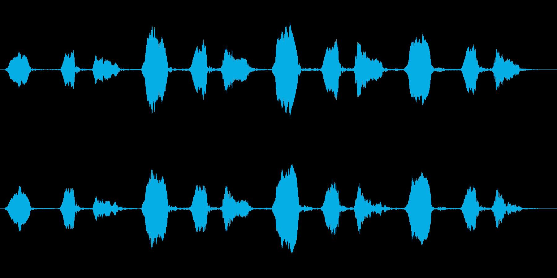 ヒガラのさえずり(ツピン ツピン)の再生済みの波形