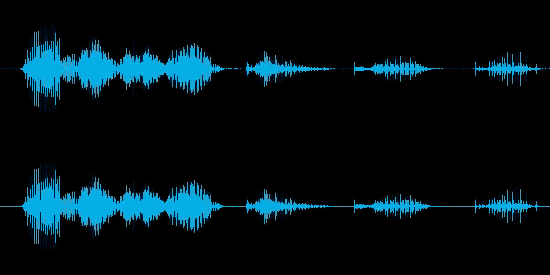 【日数・経過】7週間経過の再生済みの波形