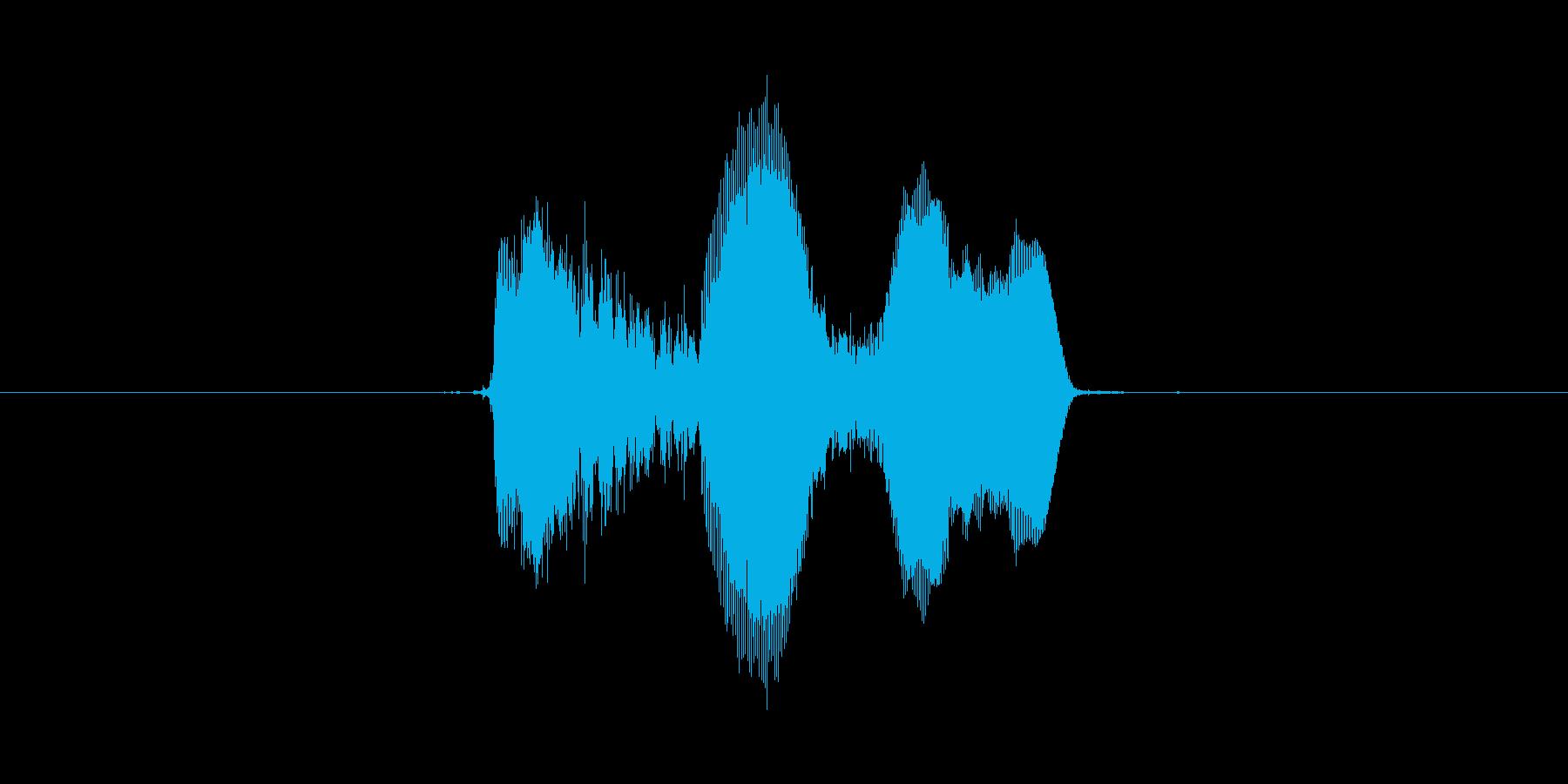 キャハハッ(明るい笑い声)の再生済みの波形