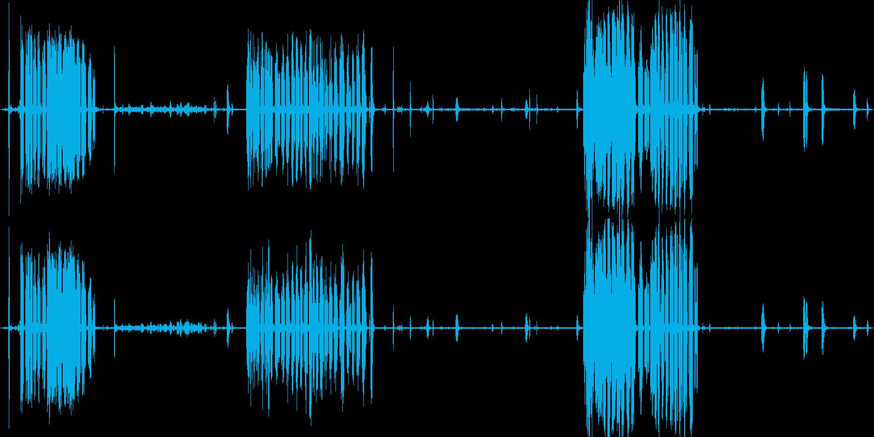 釧路湿原のタンチョウたち(冬の北海道)の再生済みの波形