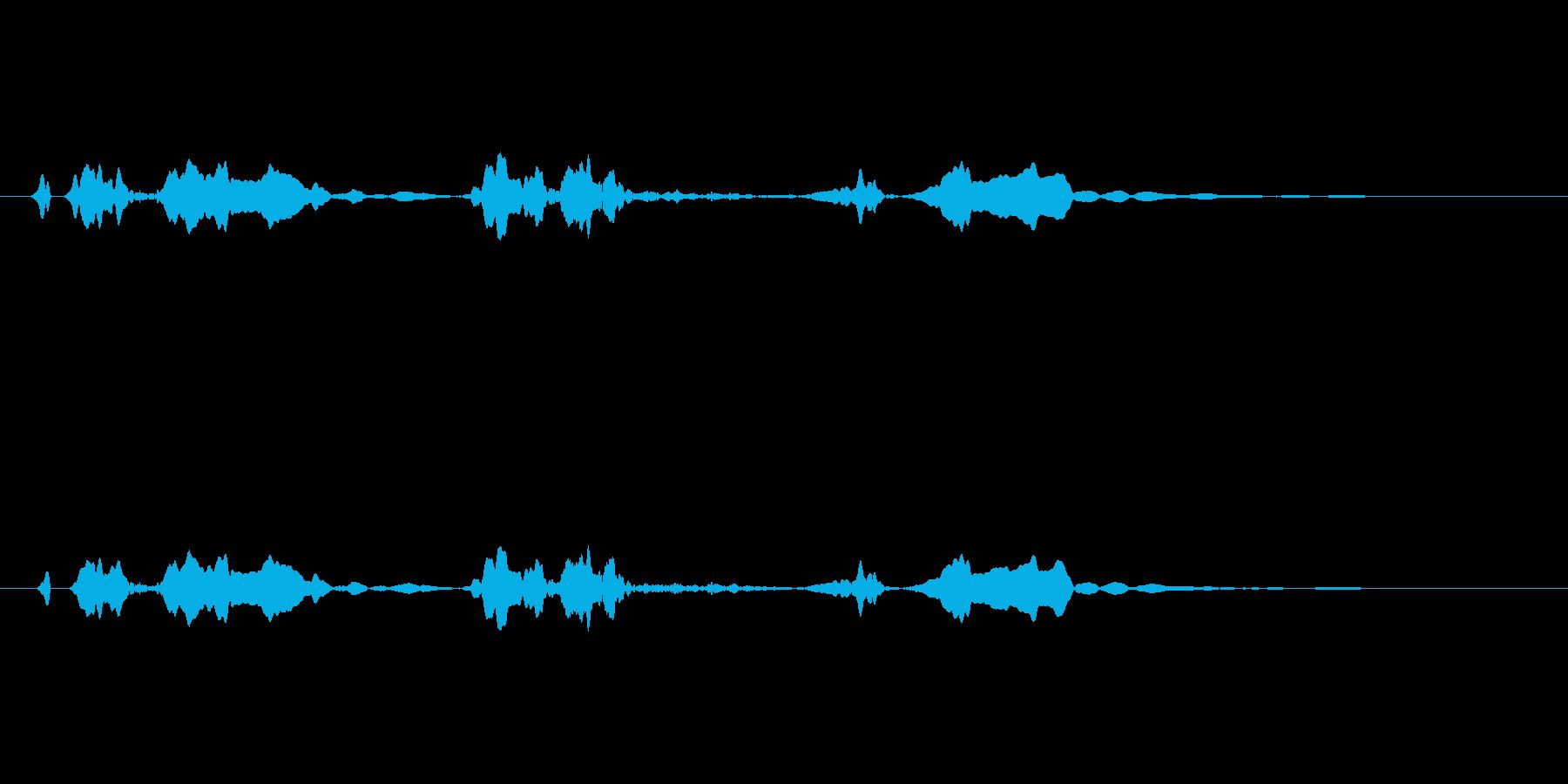ピーピヨ♪大瑠璃、おおるりの鳴き声01 の再生済みの波形