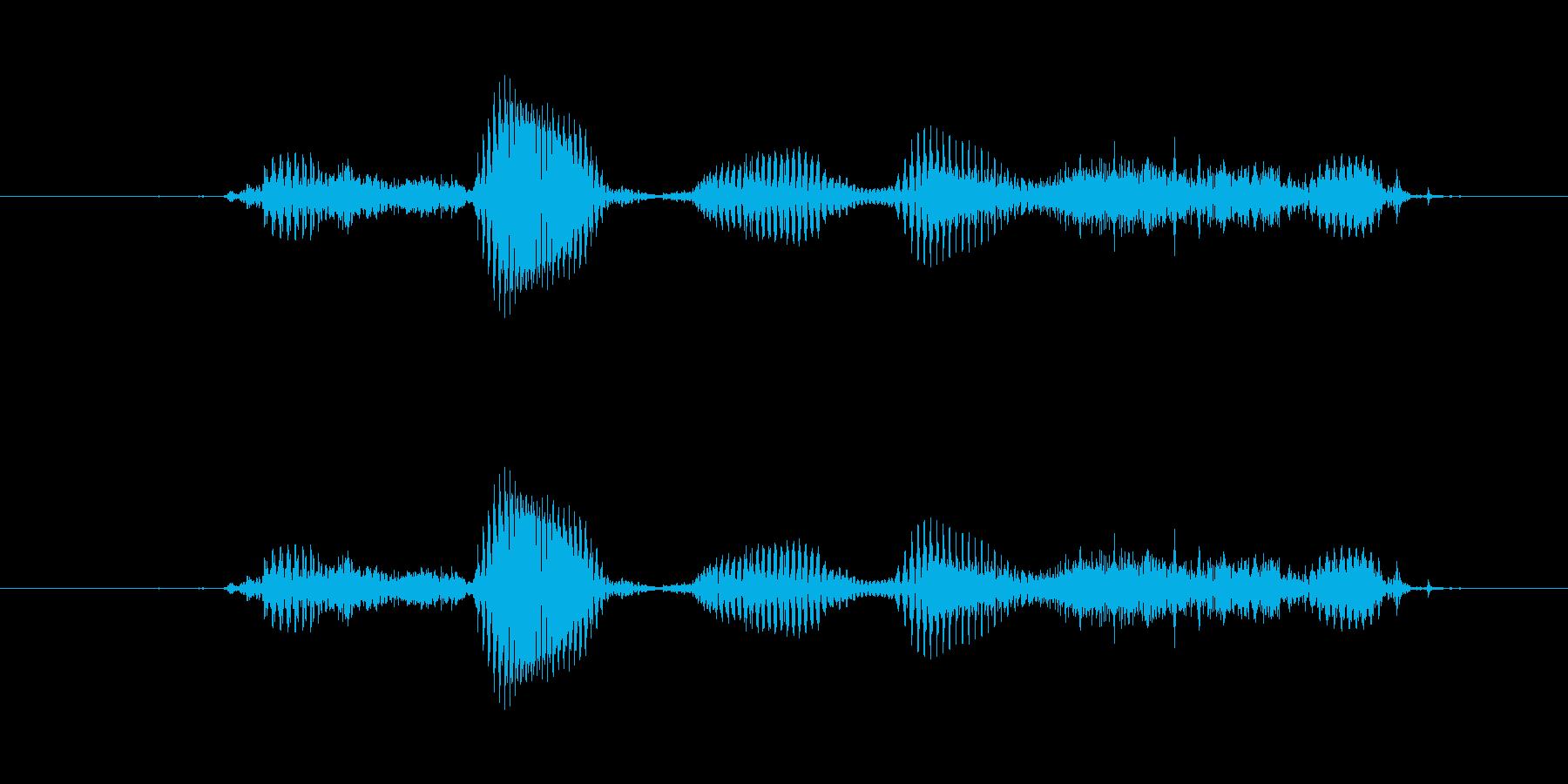 【干支】ウサギ年の再生済みの波形