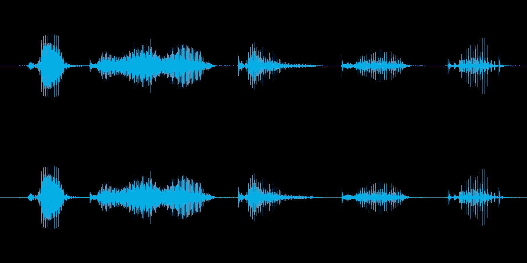 【日数・経過】6週間経過の再生済みの波形