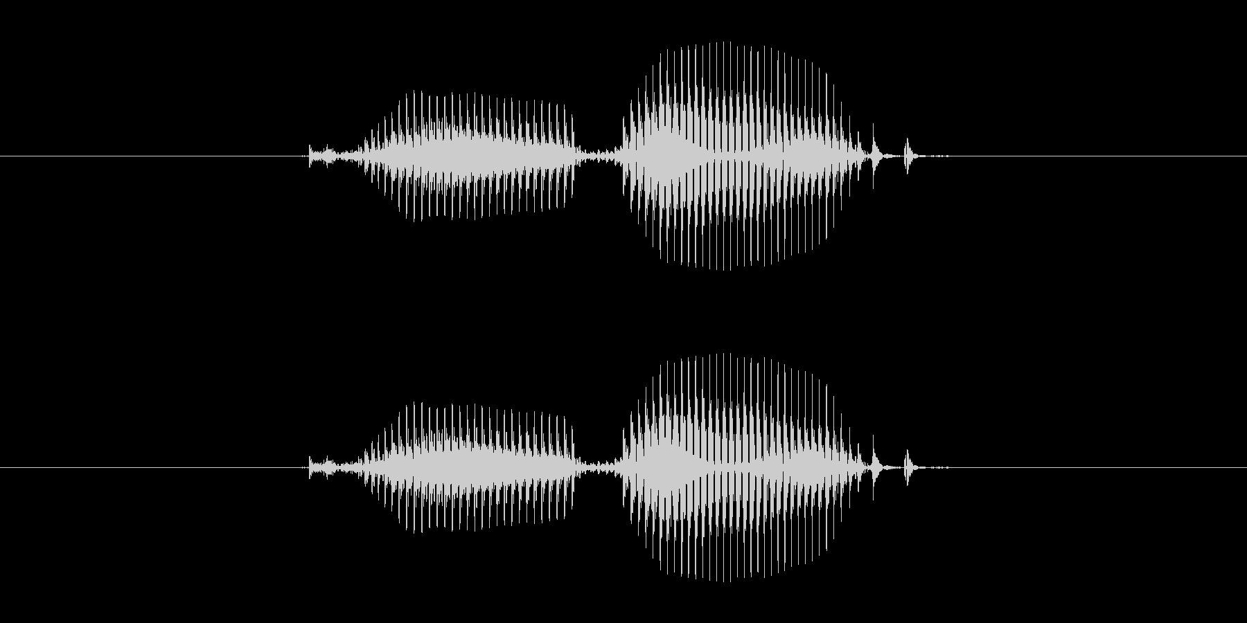 【干支】寅の未再生の波形