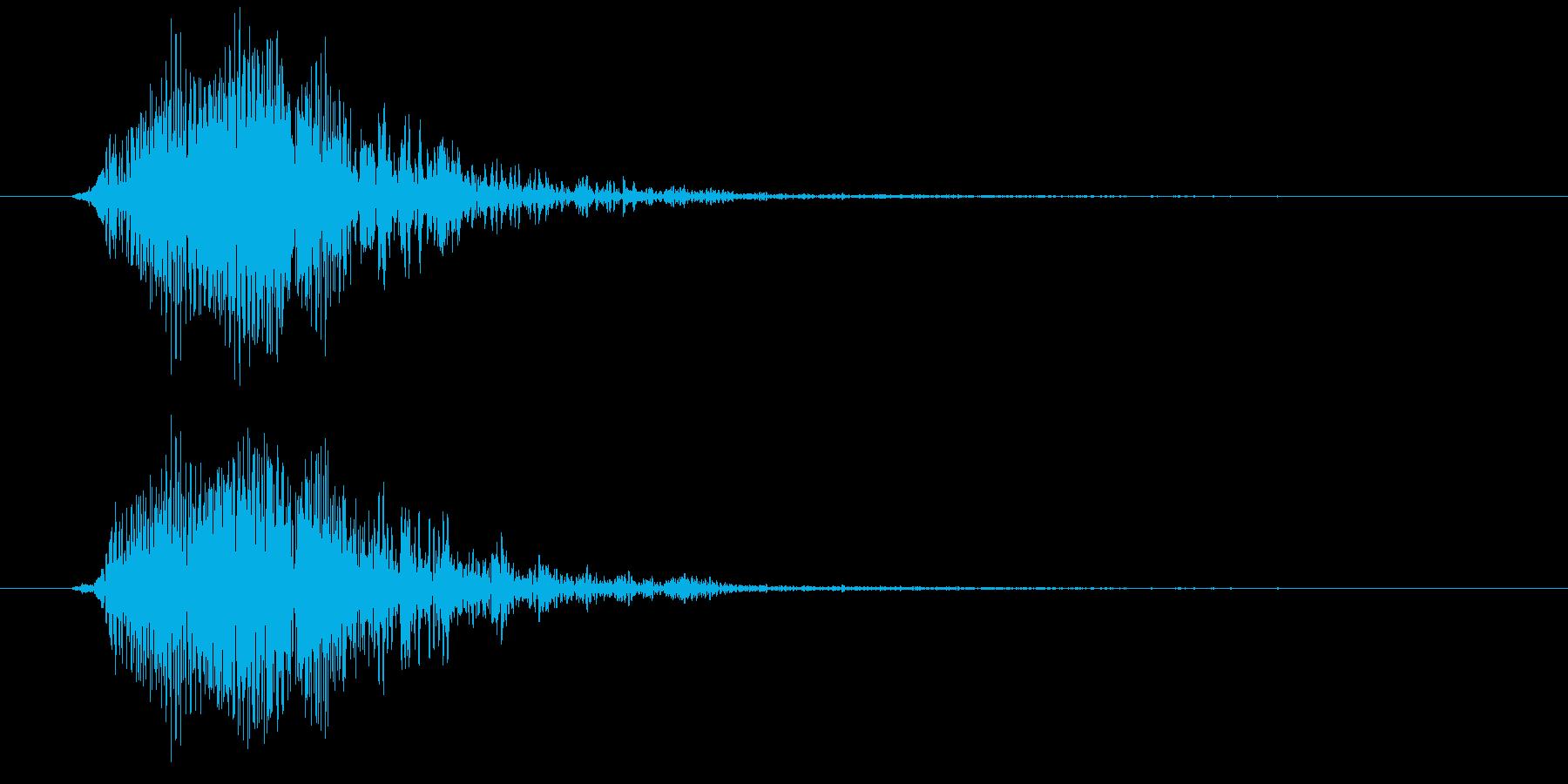 カリフォルニアアシカ(高めの声)の再生済みの波形