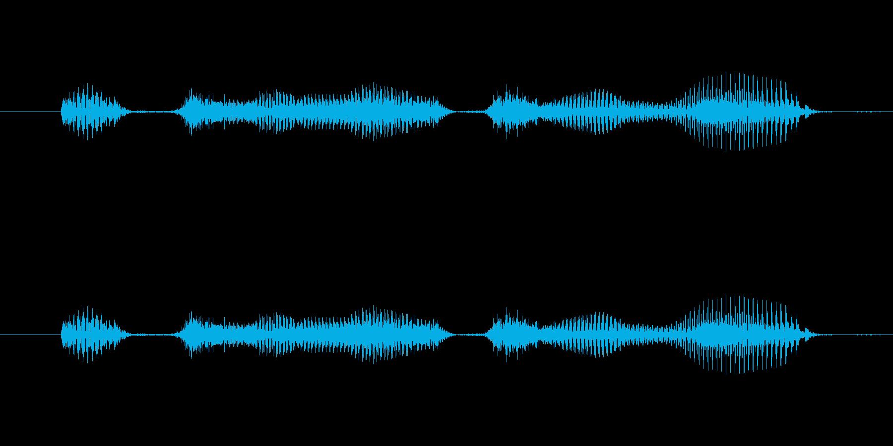 【日数・後】1日後の再生済みの波形