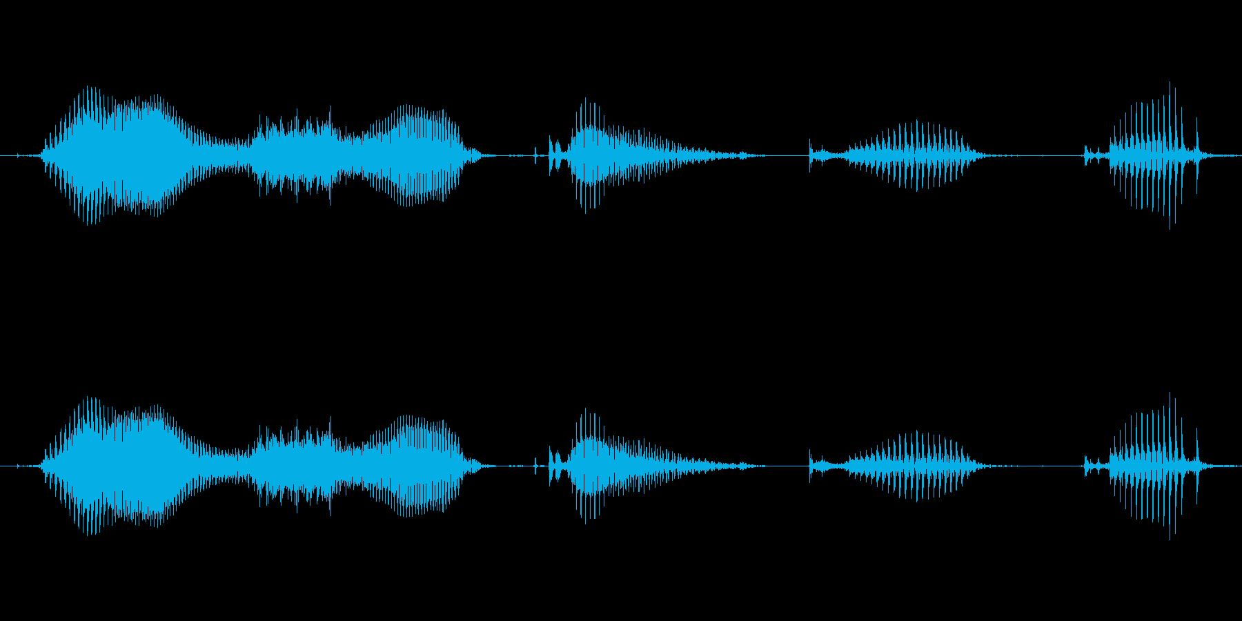 【日数・経過】4週間経過の再生済みの波形