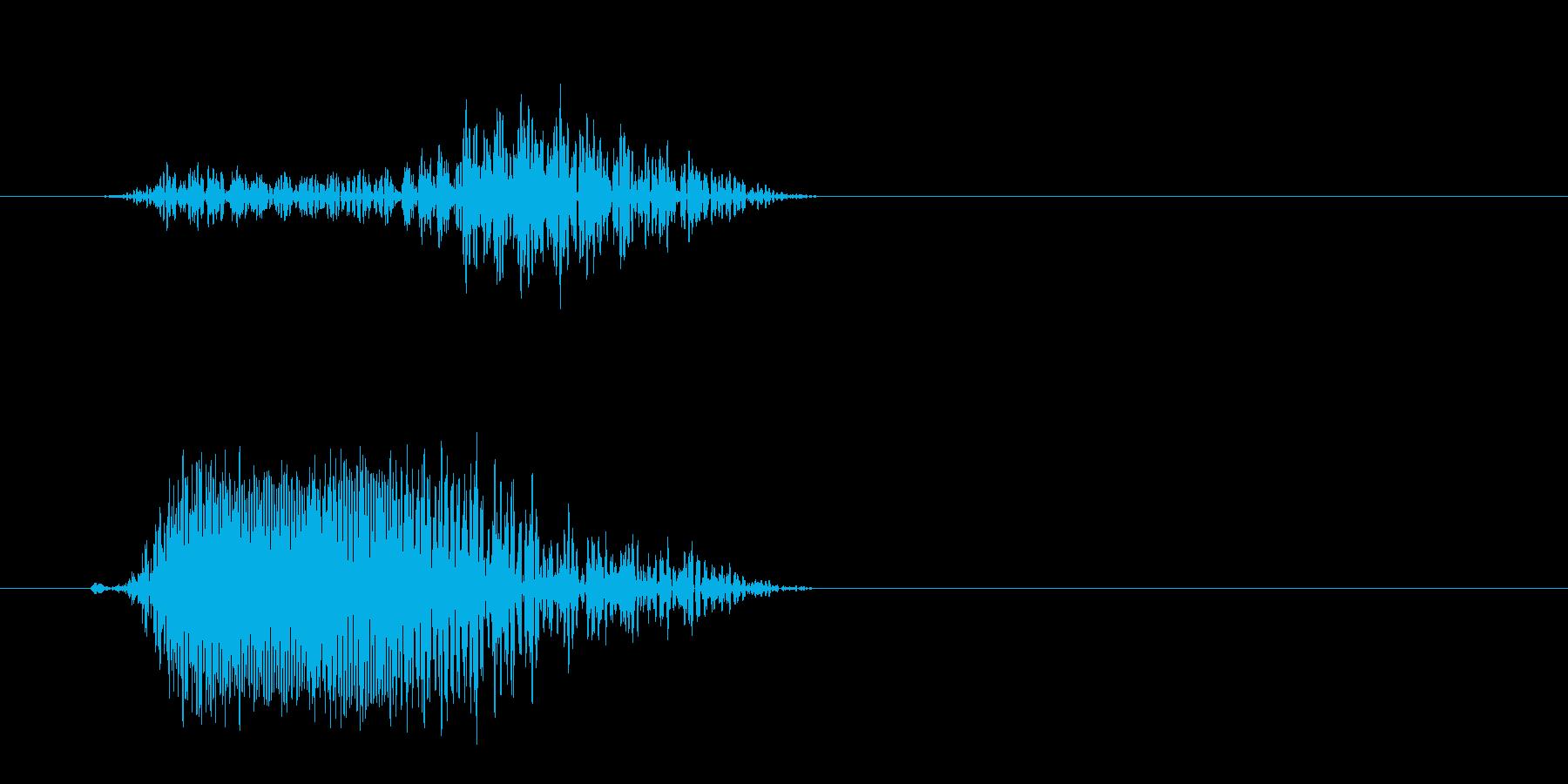 チュッと鳴く小鳥の声の再生済みの波形