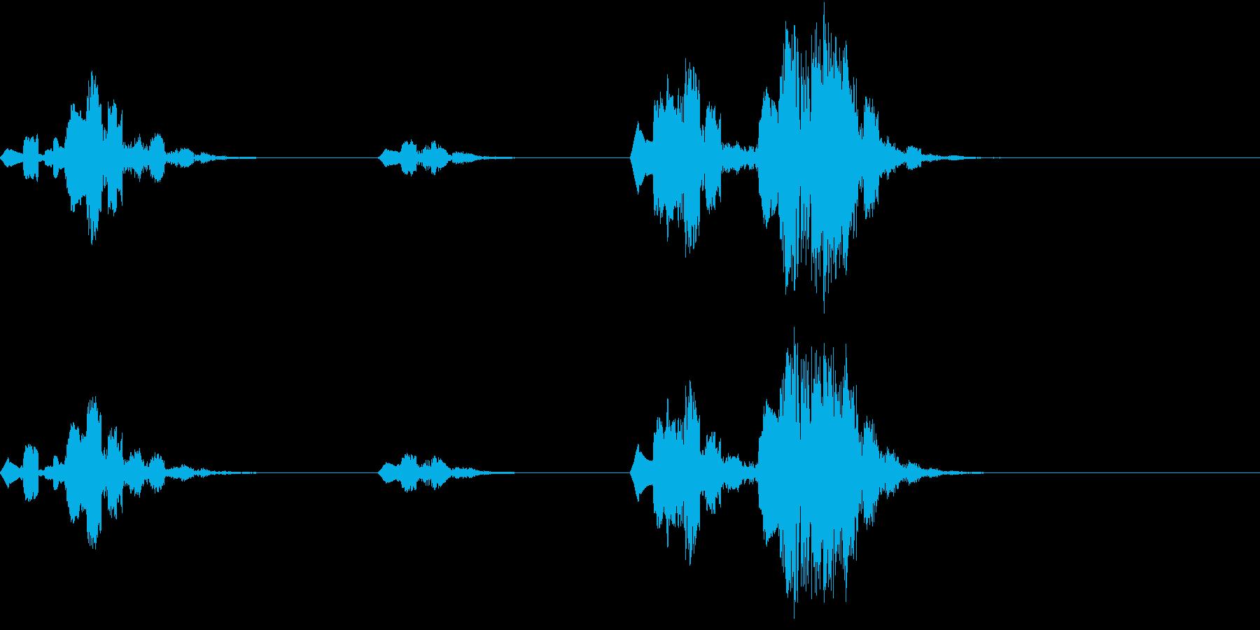 Jungle Monkeys 猿の鳴き声の再生済みの波形