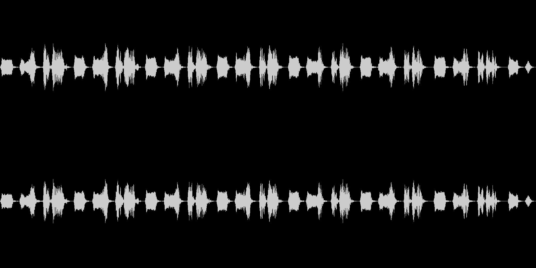 鳥 雉鳩 キジバト 山鳩 ヤマバトの未再生の波形