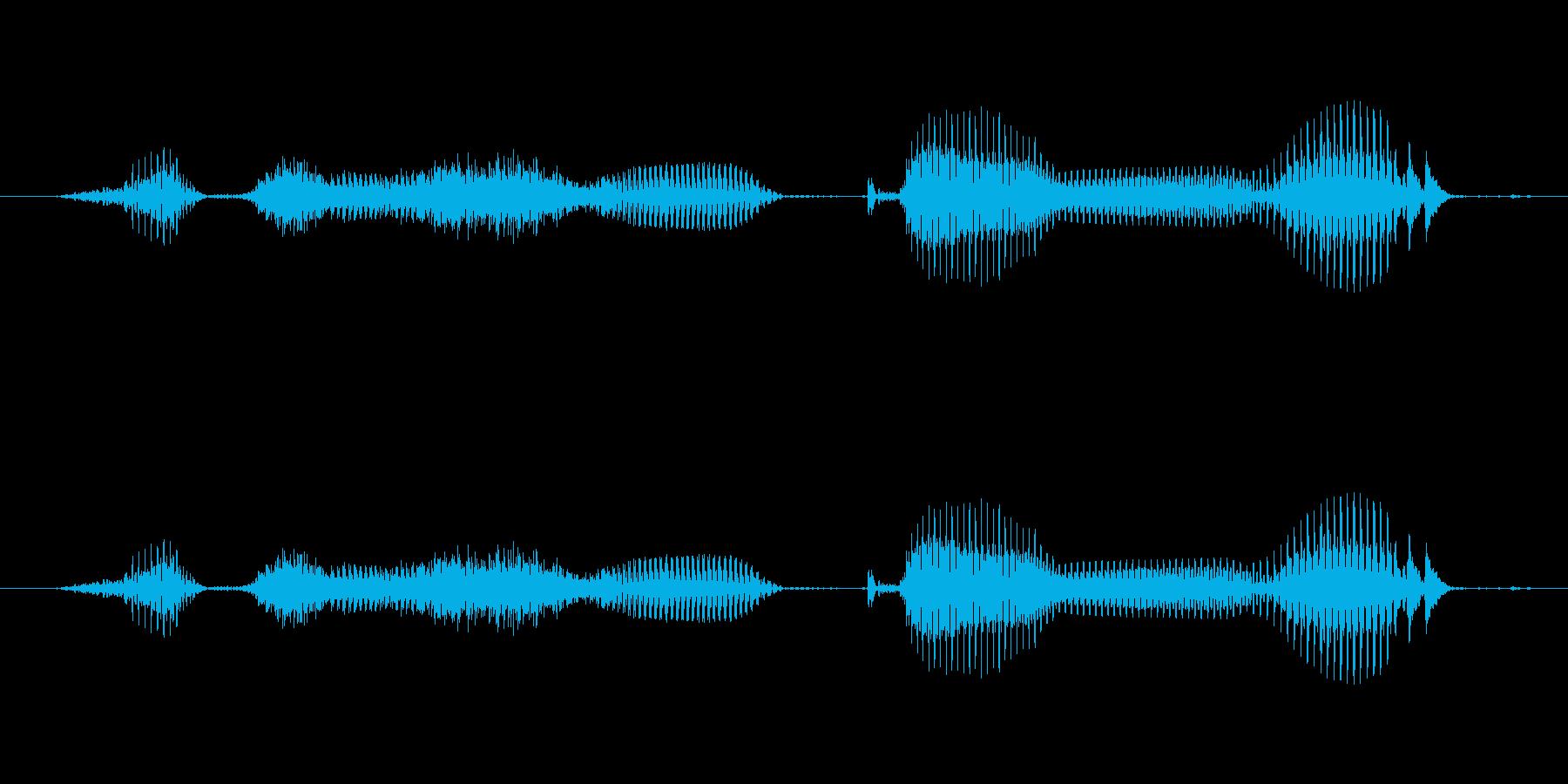 【日数・後】8週間後 (はち)の再生済みの波形