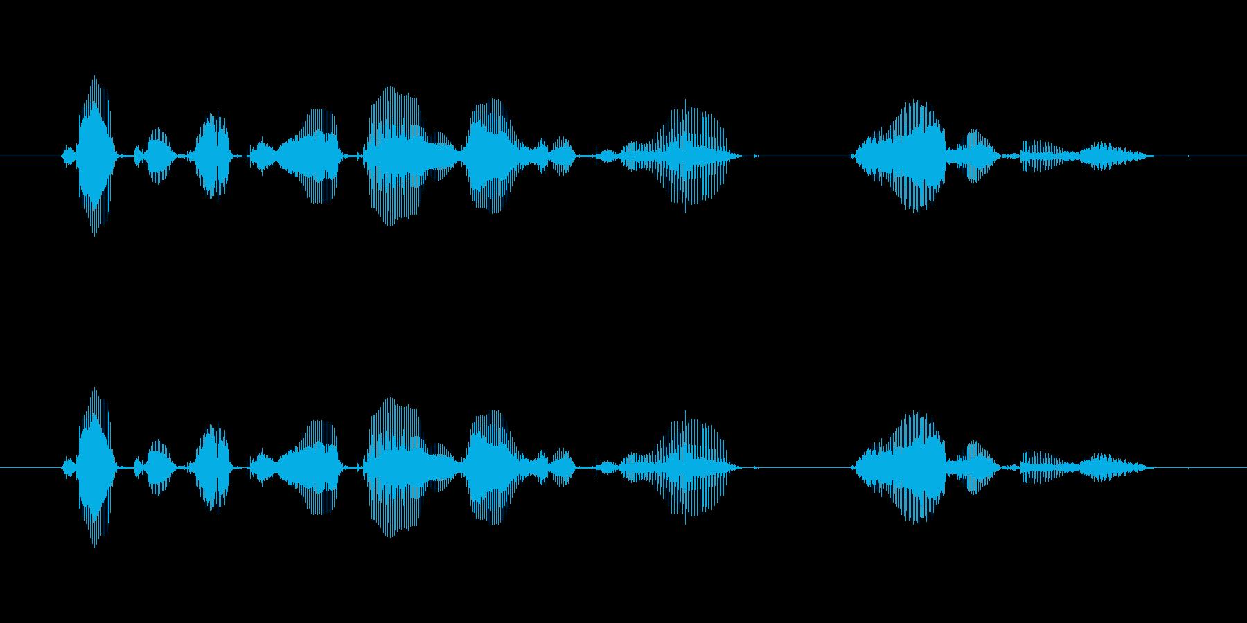 【誕生石】6月の誕生石は、パールですの再生済みの波形